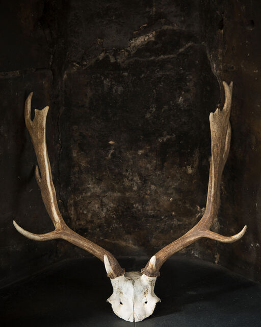 Deer antlers hanging on black wall