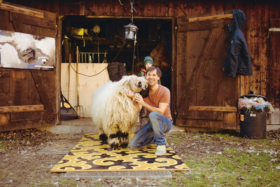 Nikolas Fricke with a Valais black-nosed sheep in front of the stable shearing